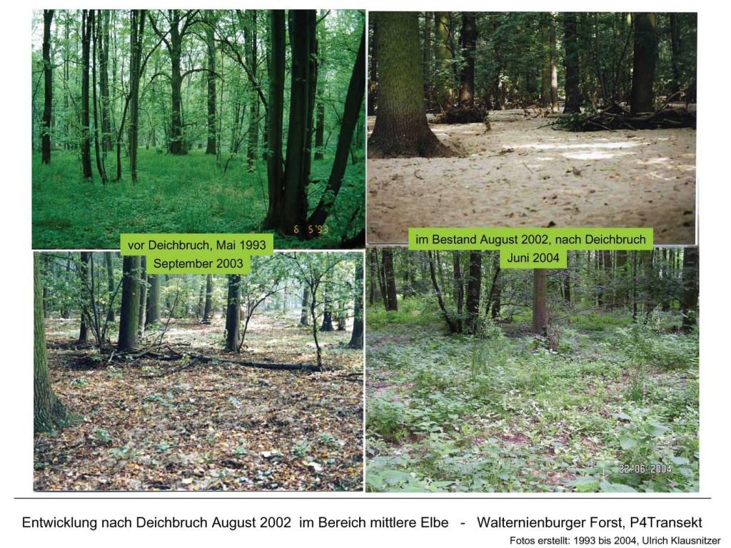 Bilder einer Vegetationsentwicklung nach Deichbruch